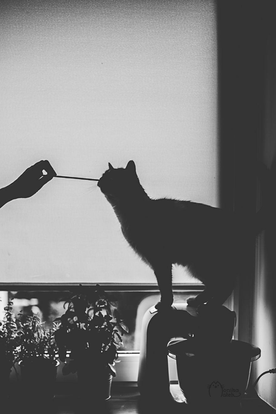 foto-gatti-bianco-nero-monika-malik-01