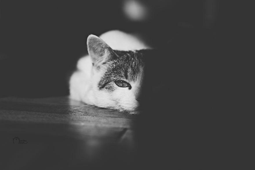 foto-gatti-bianco-nero-monika-malik-02