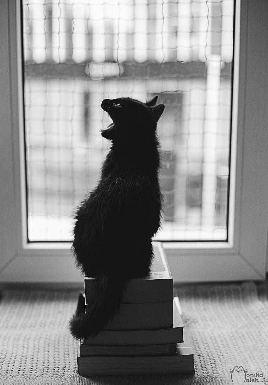 foto-gatti-bianco-nero-monika-malik-03
