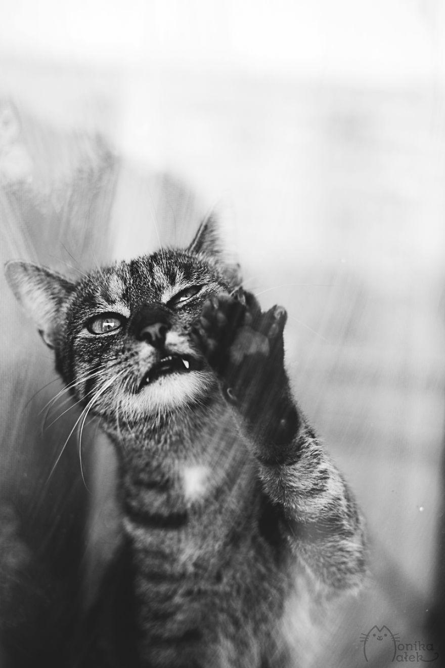 foto-gatti-bianco-nero-monika-malik-04