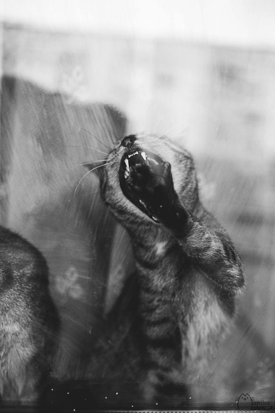foto-gatti-bianco-nero-monika-malik-05