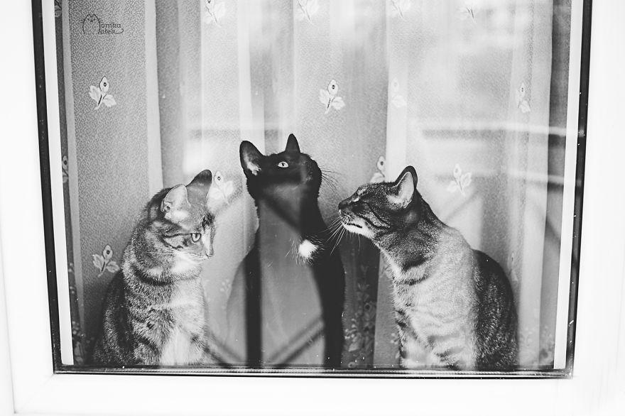 foto-gatti-bianco-nero-monika-malik-06