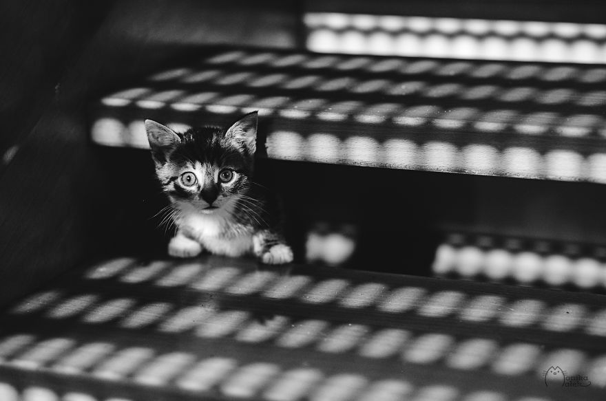 foto-gatti-bianco-nero-monika-malik-07
