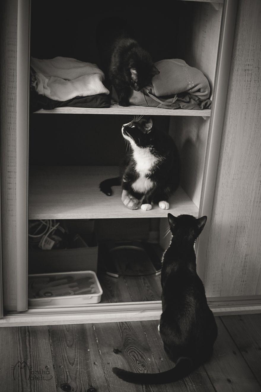 foto-gatti-bianco-nero-monika-malik-08