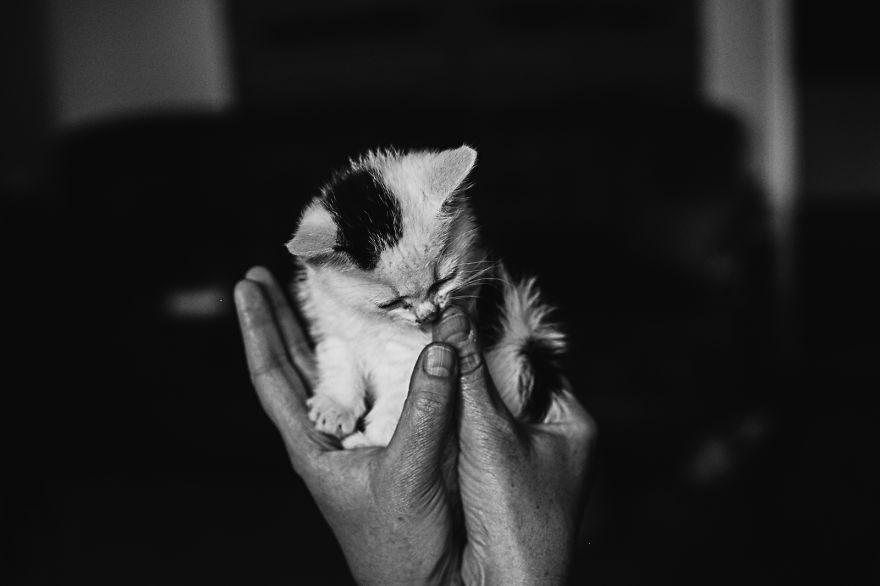 foto-gatti-bianco-nero-monika-malik-09