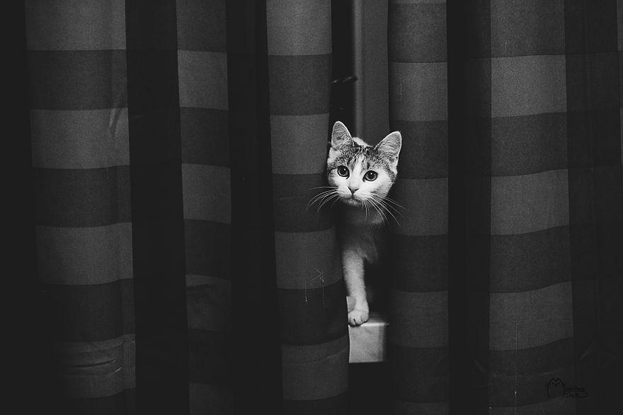 foto-gatti-bianco-nero-monika-malik-10