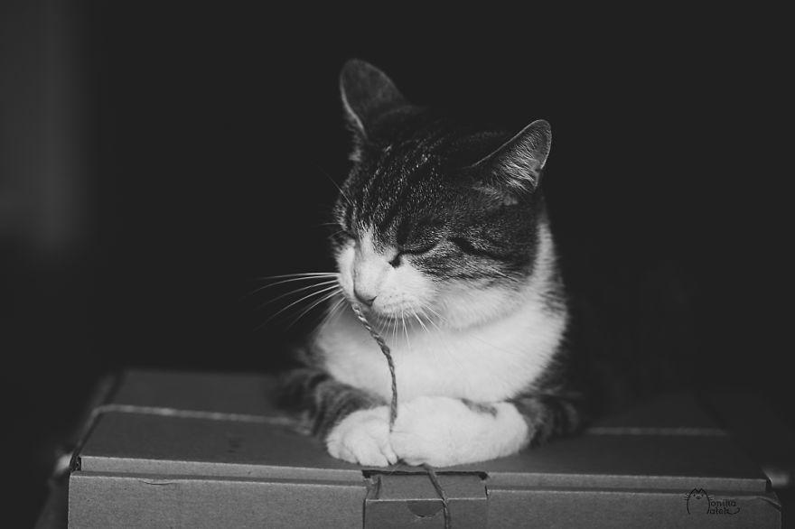 foto-gatti-bianco-nero-monika-malik-11