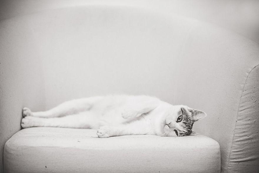 foto-gatti-bianco-nero-monika-malik-12
