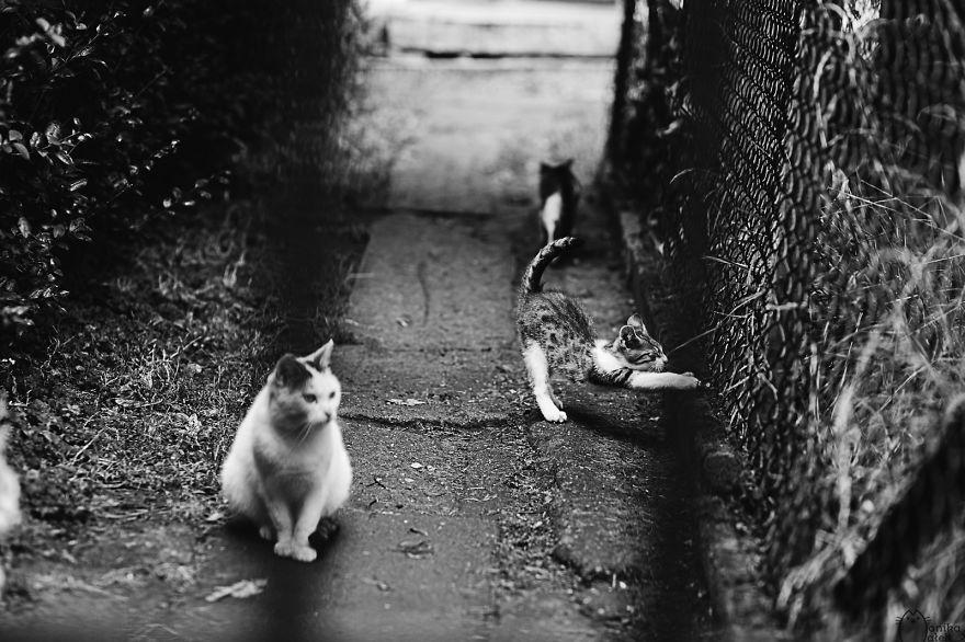 foto-gatti-bianco-nero-monika-malik-13
