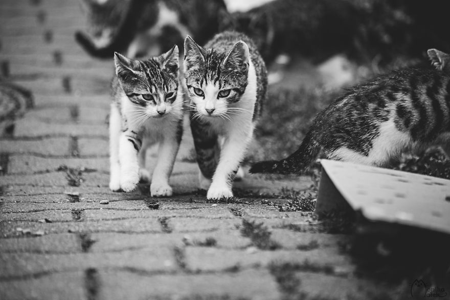 foto-gatti-bianco-nero-monika-malik-14