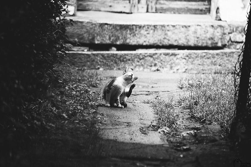 foto-gatti-bianco-nero-monika-malik-15