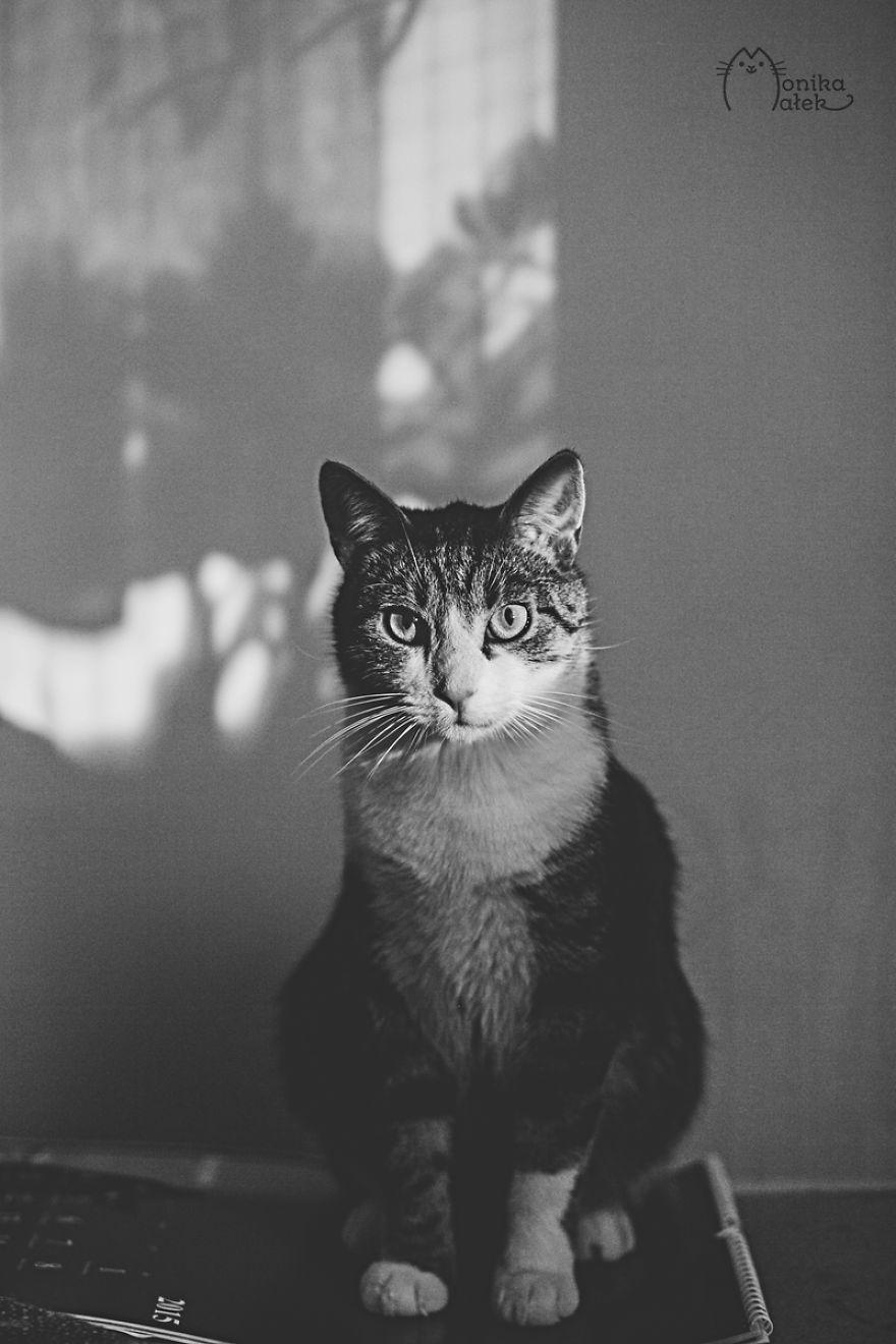 foto-gatti-bianco-nero-monika-malik-16