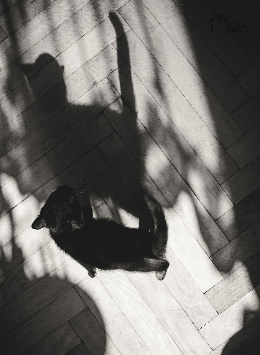 foto-gatti-bianco-nero-monika-malik-17