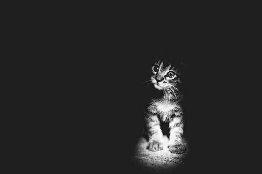 foto-gatti-bianco-nero-monika-malik-18