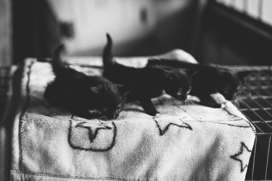 foto-gatti-bianco-nero-monika-malik-19