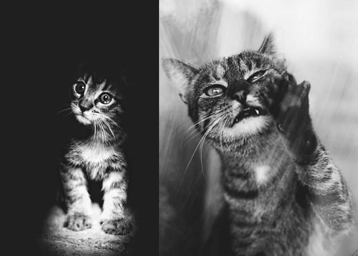 Gatti in bianco e nero keblog - Pagine a colori in bianco e nero ...