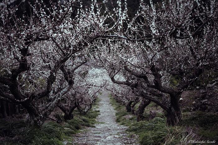 foto-paesaggi-giappone-hidenobu-suzuki-03-keb
