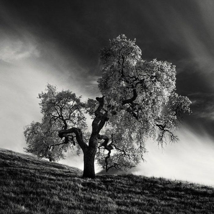 fotografia-infrarossi-alberi-solitari-california-nathan-wirth-1