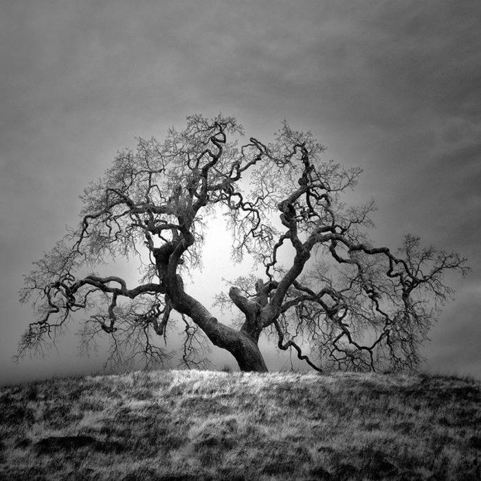fotografia-infrarossi-alberi-solitari-california-nathan-wirth-2