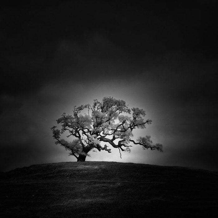 fotografia-infrarossi-alberi-solitari-california-nathan-wirth-3