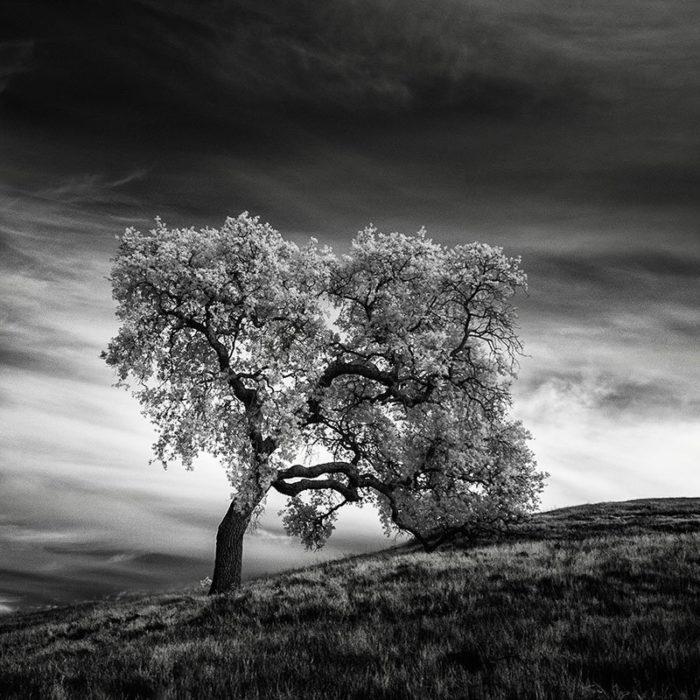 fotografia-infrarossi-alberi-solitari-california-nathan-wirth-4