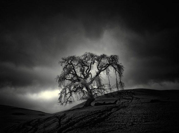 fotografia-infrarossi-alberi-solitari-california-nathan-wirth-6