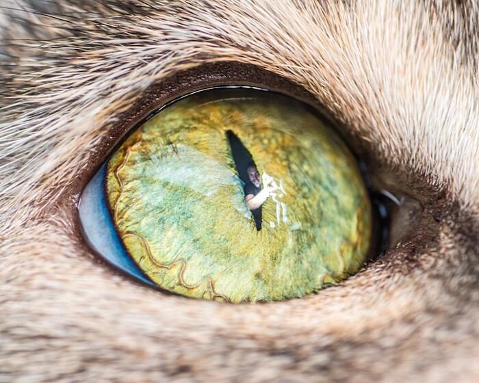 fotografia-macro-occhi-gatti-andrew-marttila-03