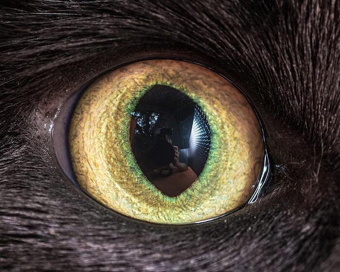 fotografia-macro-occhi-gatti-andrew-marttila-04