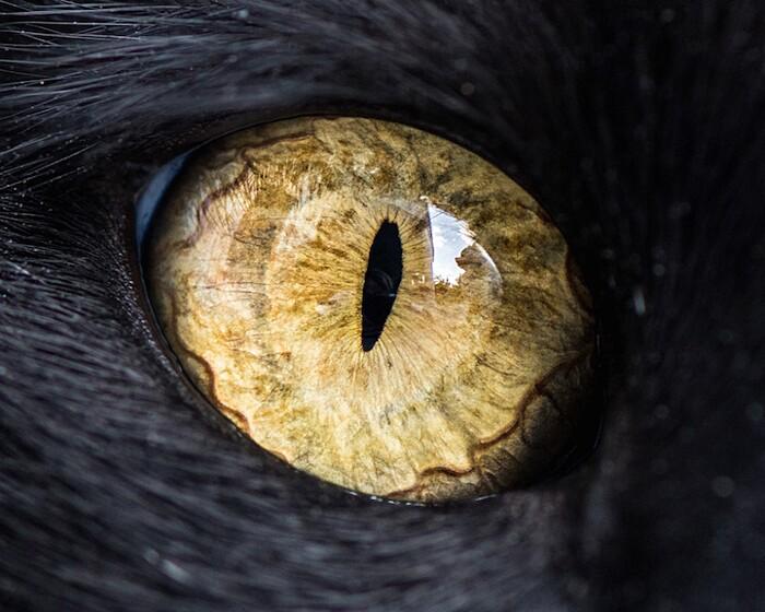 fotografia-macro-occhi-gatti-andrew-marttila-08