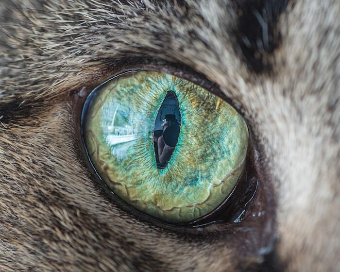 fotografia-macro-occhi-gatti-andrew-marttila-10