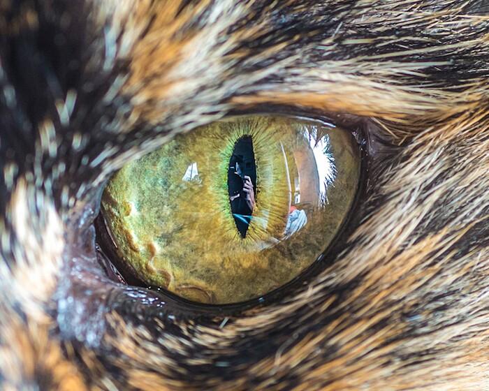 fotografia-macro-occhi-gatti-andrew-marttila-11