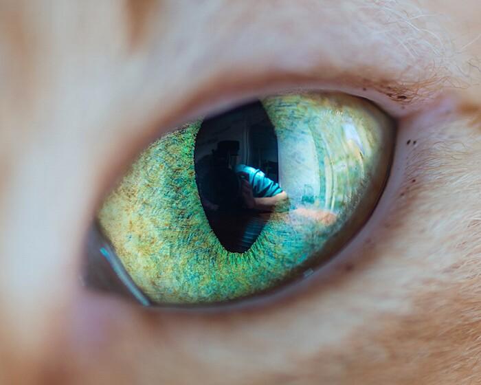 fotografia-macro-occhi-gatti-andrew-marttila-12