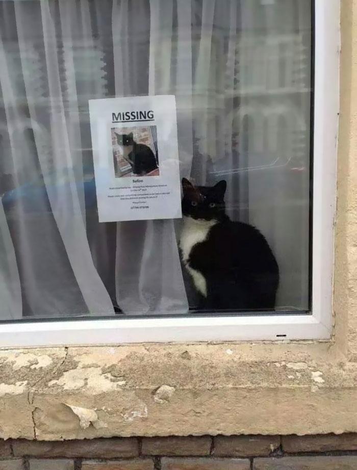 gatto-scomparso-trovato-vicino-poster-gatto-smarrito