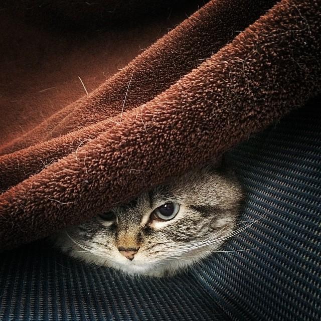 gatto-vampiro-espressione-cattiva-loki-08