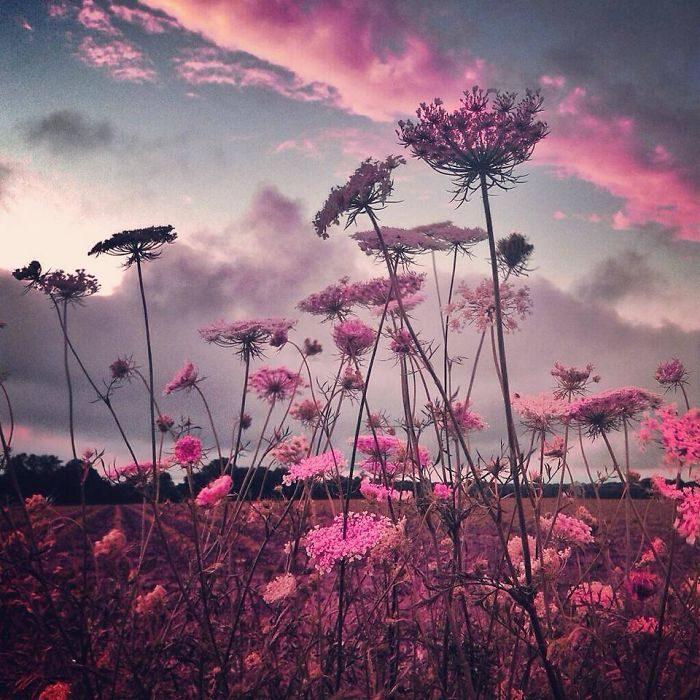 immagini-fotografia-surreale-iphone-mississippi-melissa-vincent-05