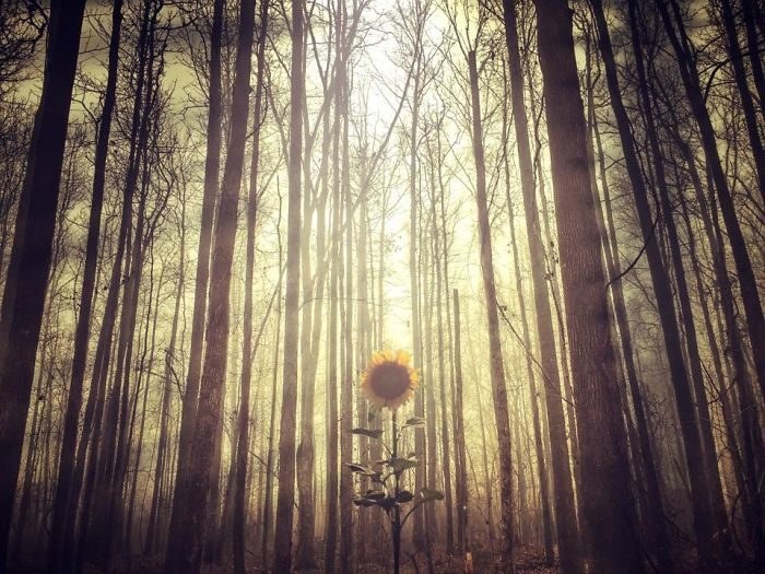 immagini-fotografia-surreale-iphone-mississippi-melissa-vincent-06