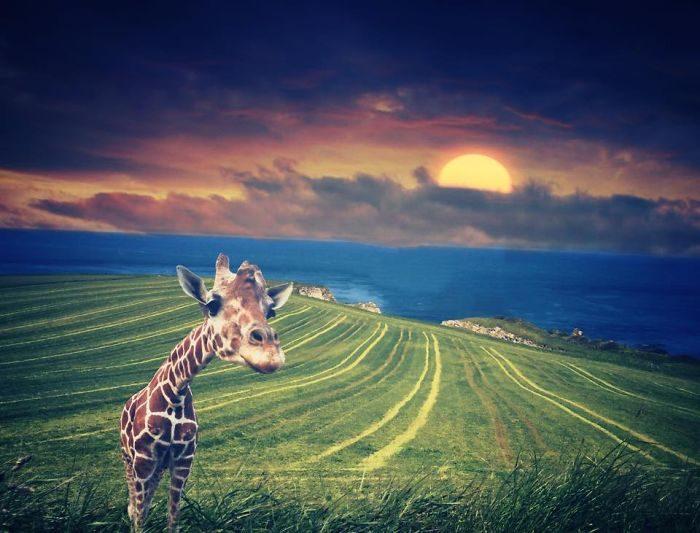 immagini-fotografia-surreale-iphone-mississippi-melissa-vincent-22