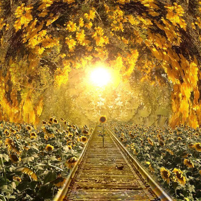 immagini-fotografia-surreale-iphone-mississippi-melissa-vincent-24