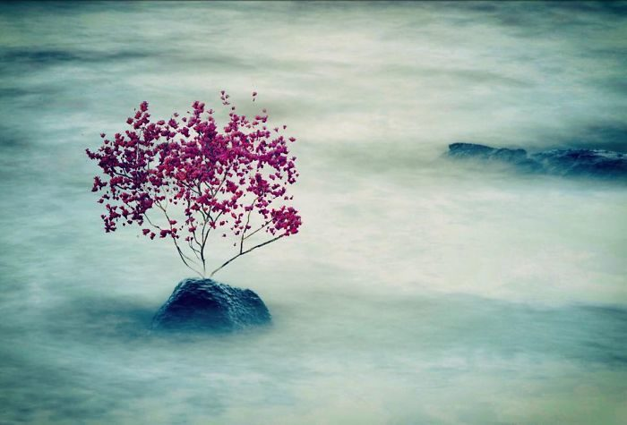 immagini-fotografia-surreale-iphone-mississippi-melissa-vincent-26