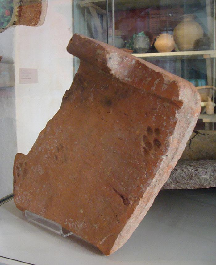 impronte-di-gatto-su-tegole-antica-roma-3