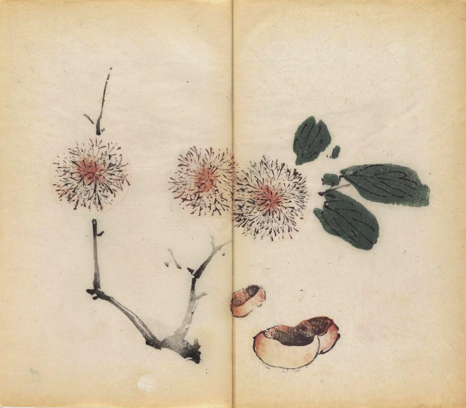 libro-stampato-a-colori-piu-antico-del-mondo-09
