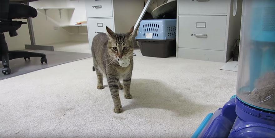 mangiatoia-per-gatti-contringe-gatto-a-cacciare-cibo-ben-milliam-1