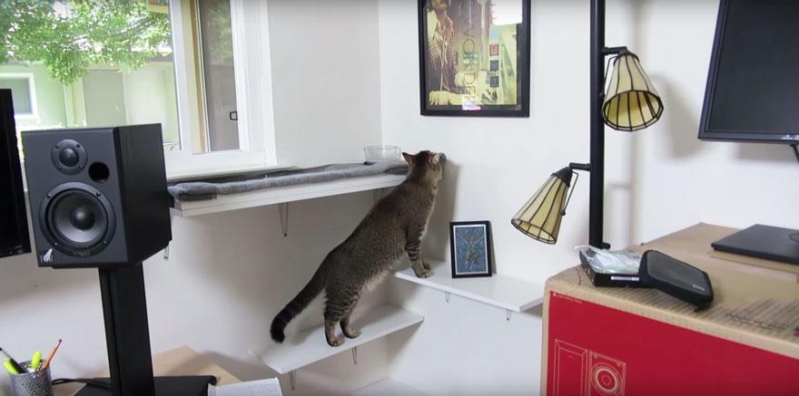 mangiatoia-per-gatti-contringe-gatto-a-cacciare-cibo-ben-milliam-3