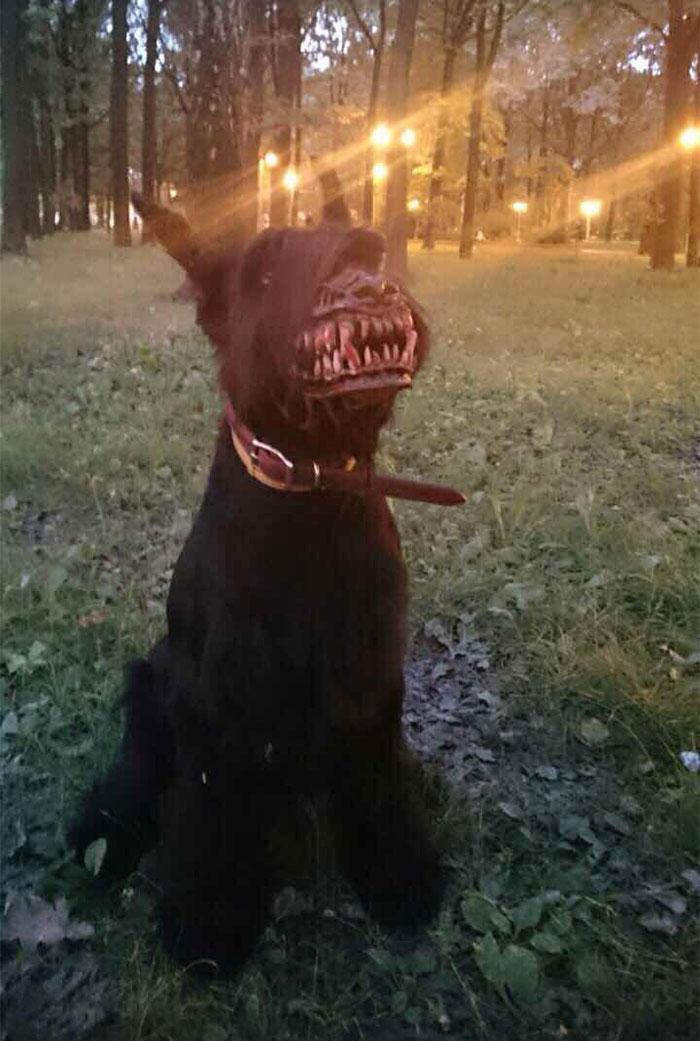 museruola-cani-licantropo-feroce-russia-1