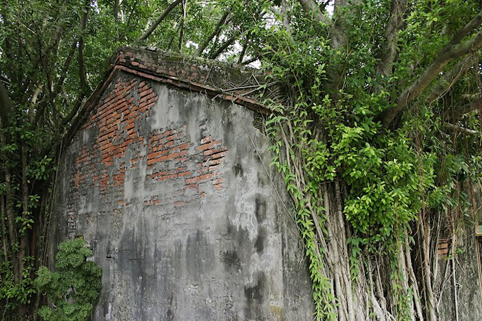 natura-conquista-edifici-uomo-radici-alberi-banyan-taiwan-01