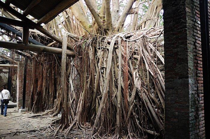 natura-conquista-edifici-uomo-radici-alberi-banyan-taiwan-02