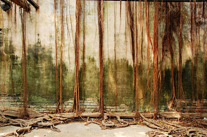 natura-conquista-edifici-uomo-radici-alberi-banyan-taiwan-03