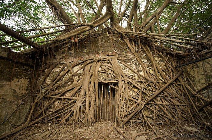 natura-conquista-edifici-uomo-radici-alberi-banyan-taiwan-06