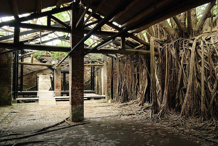natura-conquista-edifici-uomo-radici-alberi-banyan-taiwan-07