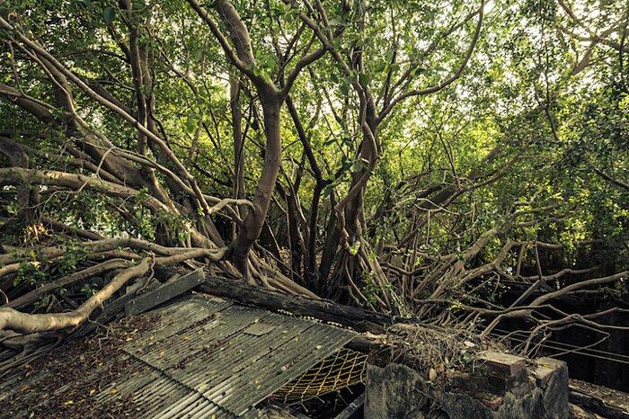 natura-conquista-edifici-uomo-radici-alberi-banyan-taiwan-08